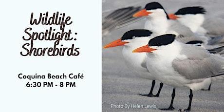 Wildlife Spotlight: Shorebirds tickets