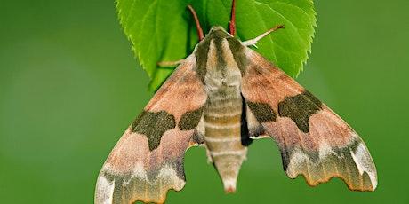 Watch Moths June (Zoom event) tickets