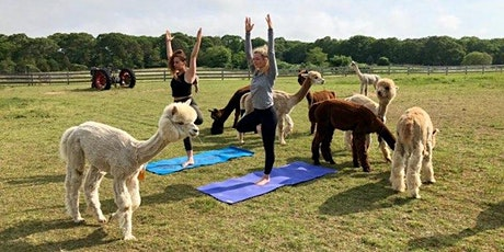 Second Date!! Outdoor Yoga with Alpacas at Nash Hill Farm! tickets