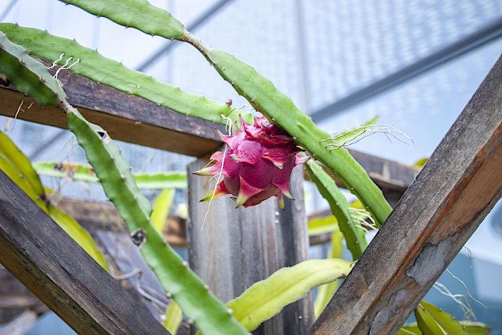 Funan Urban Farm Tour by Edible Garden City image