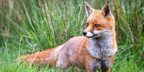 Fox Class - Parents Evening tickets