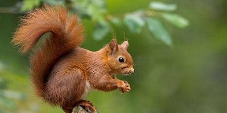 Squirrel Class - Parents Evening tickets