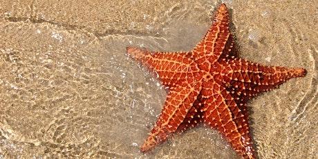 Starfish Class - Parents Evening tickets