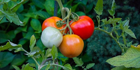 Vegetable Gardening Update: Pests, Diseases, tickets
