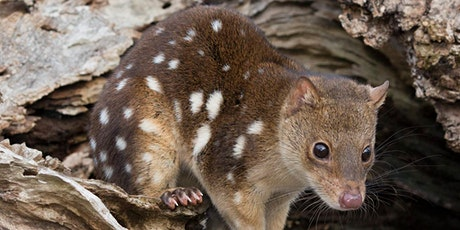 Nature Talks in the Library: Postfire monitoring of Spotted-tailed Quolls tickets