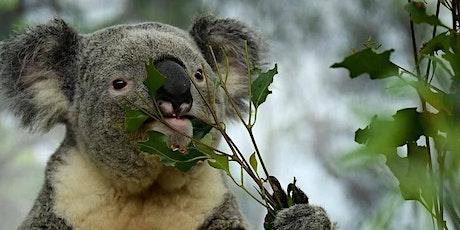 Koala Habitat Restoration Day - Arthurs Seat State Park tickets