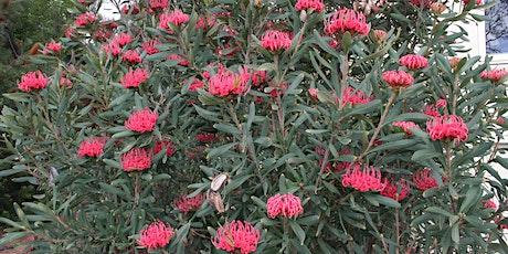 AUSTRALIAN NATIVE PLANT SALE tickets
