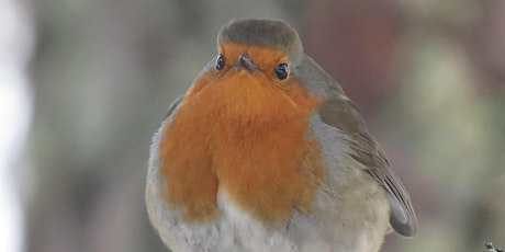 Introduction to Birdsong Webinar tickets
