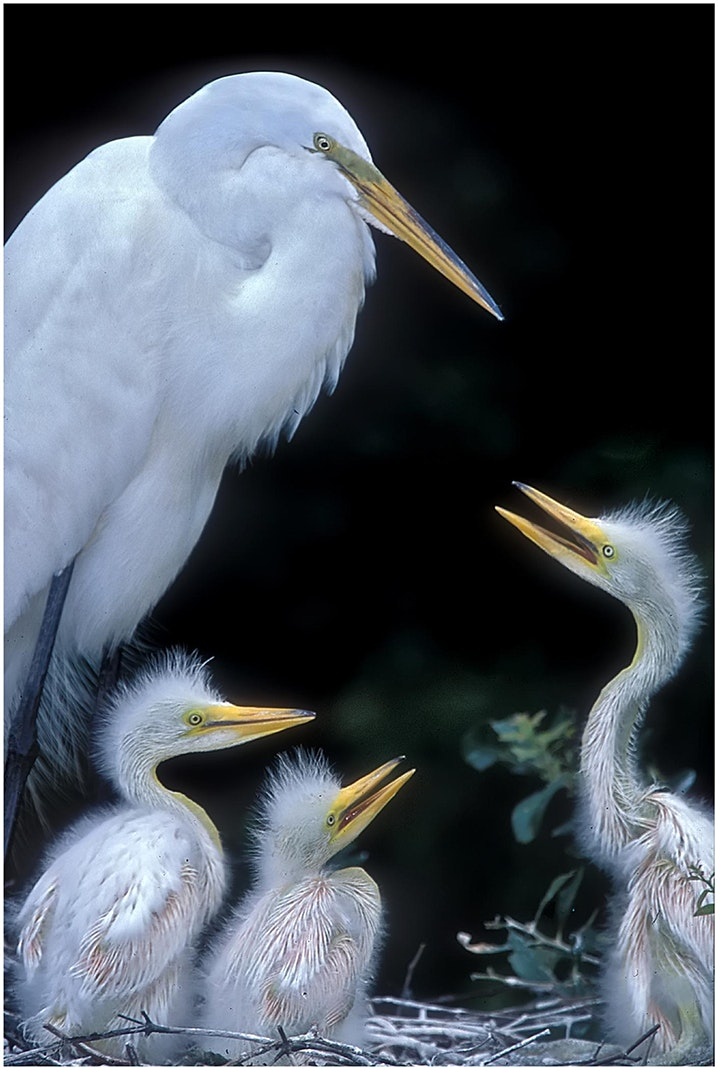 Photographing Birds – from portraits to flight image