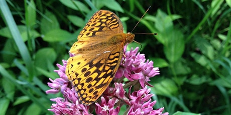 Butterflies in the Forest Preserves tickets