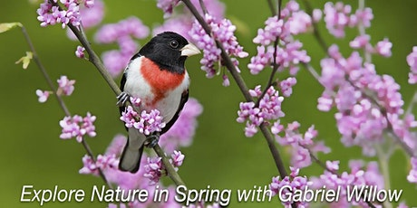 Spring Bird Migration in Prospect Park, Brooklyn tickets