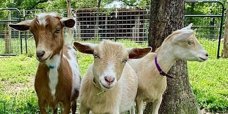 Joy of Goats boletos