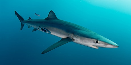 An Introduction to the Blue Shark - Biology, Behaviour & Conservation tickets