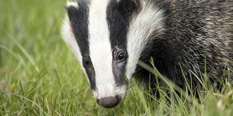 British Mammals Sunday Sessions - European Badger tickets
