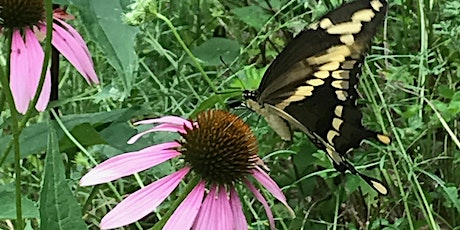 Pollinators and How to Help Them Help Us with Cecily Frazier tickets