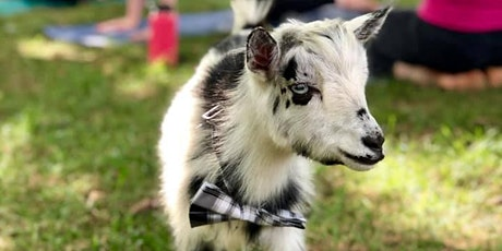 Goat Yoga at the Tiny House in Purcellville tickets