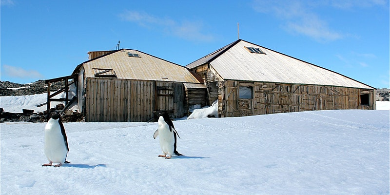 Mawson's huts with penguins