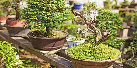 The Art of Bonsai: Principles and Practices. Sunday, 17 October 2021 tickets