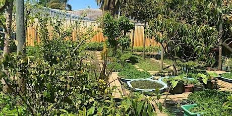 Transition Town Belmont's visit to Mumma Phan's Vietnamese Herb Garden tickets