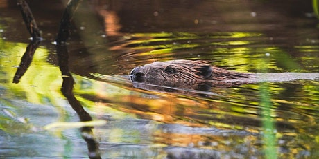 Behind the Scenes of a Beaver Reintroduction tickets