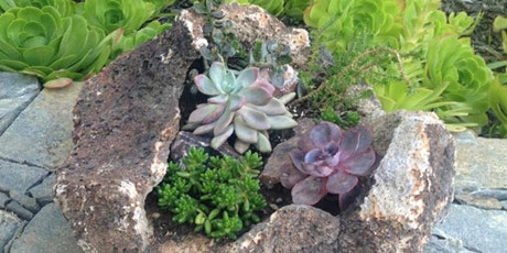 Sips & Stems-Earth Day Succulent Rock Design tickets
