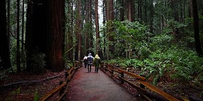 A Virtual Outing:  Muir Woods Saunter