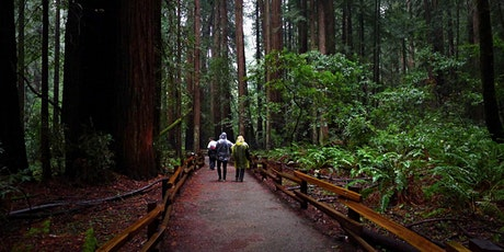 A Virtual Outing:  Muir Woods Saunter tickets