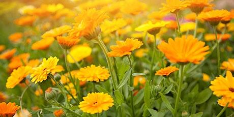 Distribution de fleurs  - Secteur NDG - 15  mai 2021 (4985 av. West Hill) billets