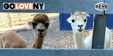 Alpaca Trek at Lilymoore Farm tickets