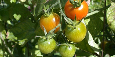 Be Healthy: Grow Your Own Food! (BHGYOF) 4-week class series - AM class tickets