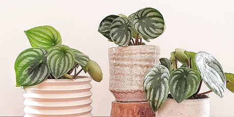 Growing Beautiful Indoor Plants tickets