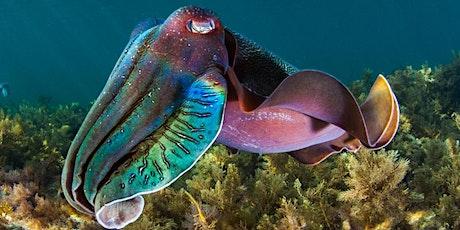 Mucha's Snorkel with Cuttlefish Extravaganza- Women Only tickets
