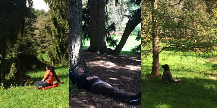 Forest Bathing Half Day Retreat image