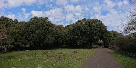 Etna Trekking: Il Bosco dei Centorbi biglietti