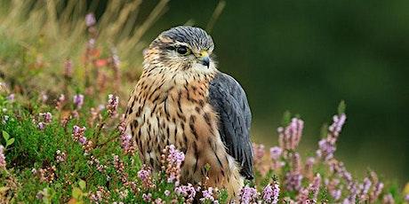 Upland birds tickets