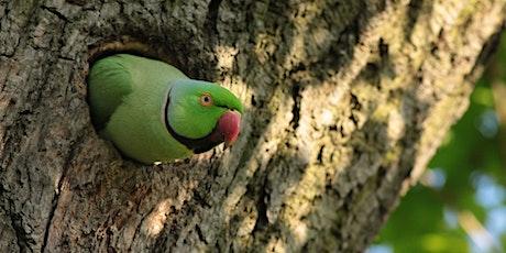 Nature Photography Workshop At Regents Park tickets