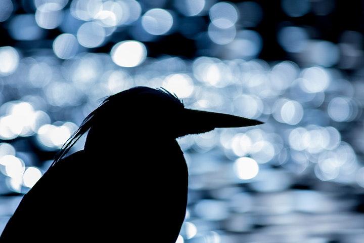 Nature Photography Workshop At Regents Park image