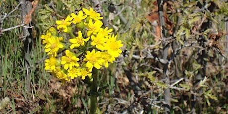 Wildflower Hike: Willow Creek Trail tickets