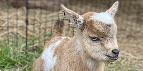 Goat Yoga Nashville- Marvelous May tickets