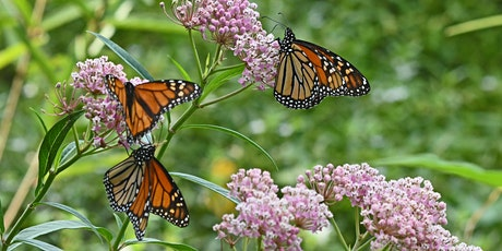 Be the Super Generation That Saves the Monarch Butterfly tickets