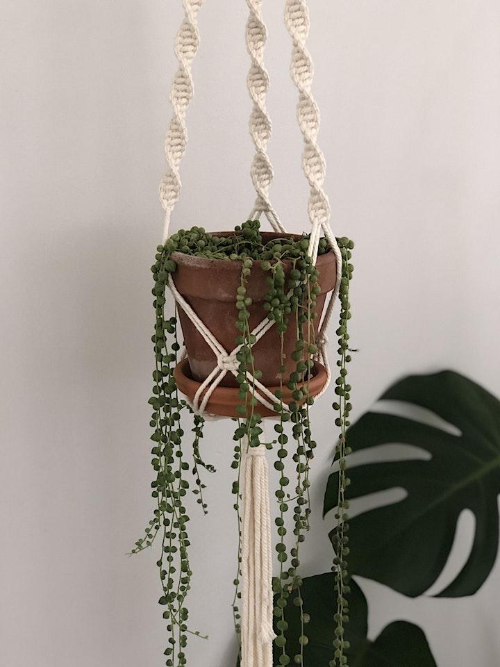 Get Crafty - Macramé Pot Hanger - Adults image