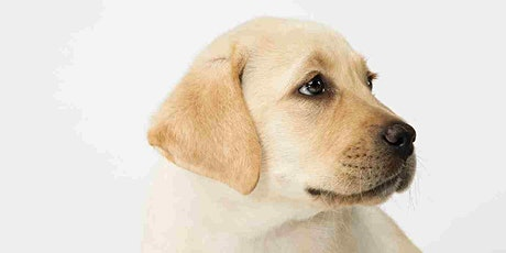 Online Seeing Eye Dogs Puppy Carer Info Session tickets