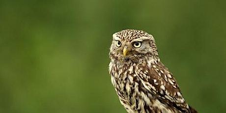 Wildlife Live Webinar - Owls (EWC2821) tickets