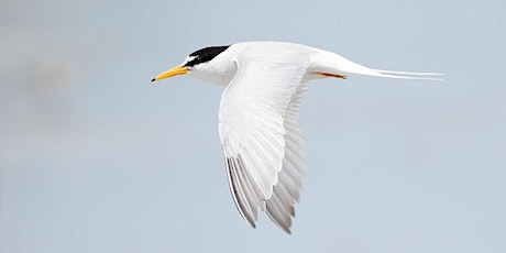 Member Meeting and 'Bilingual Education Program Conserves Little Terns' tickets