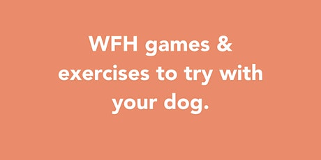 WFH games & exercises to try with your dog tickets