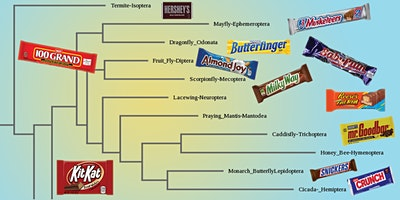 Virtual Lab: Candy Bar Phylogenetics (Age 10-14)