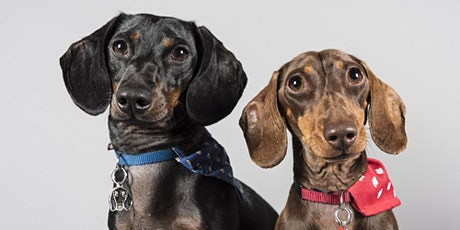 Pet Portrait Event (Morrinsville) - A day to remember for you & your pet tickets