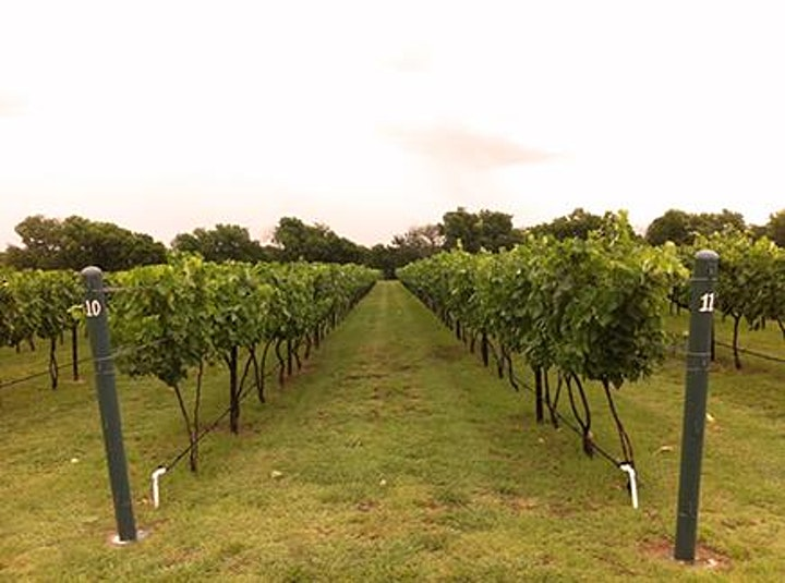 Eden Hill Winery Estate Concert Series - Emerald City Band image