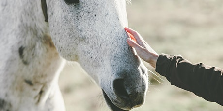 Equine Therapy, an Inclusive Solution in Extraordinary Times tickets