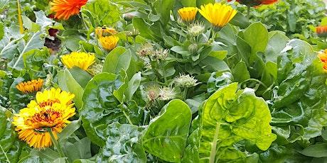 Revitalising your kitchen garden - EESSA term 1 networking event tickets
